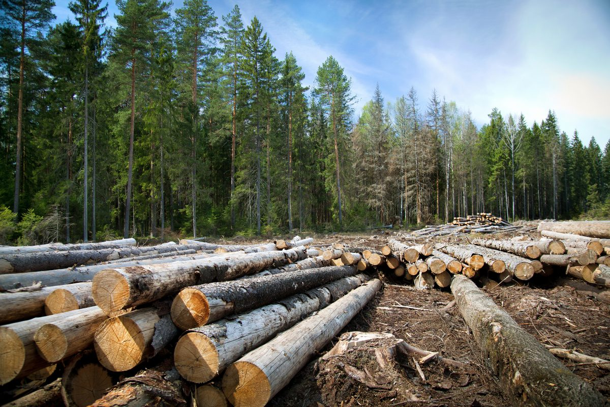 3 Things You Need to Know About Timber Sales Bonds